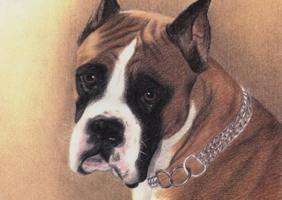"Coloured Pencil Pet Portrait <a href=""/coloured-pencil-quote/"">CLICK HERE TO ORDER THIS STYLE</a>"
